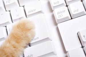 Excelパソコン猫の手も借りたい